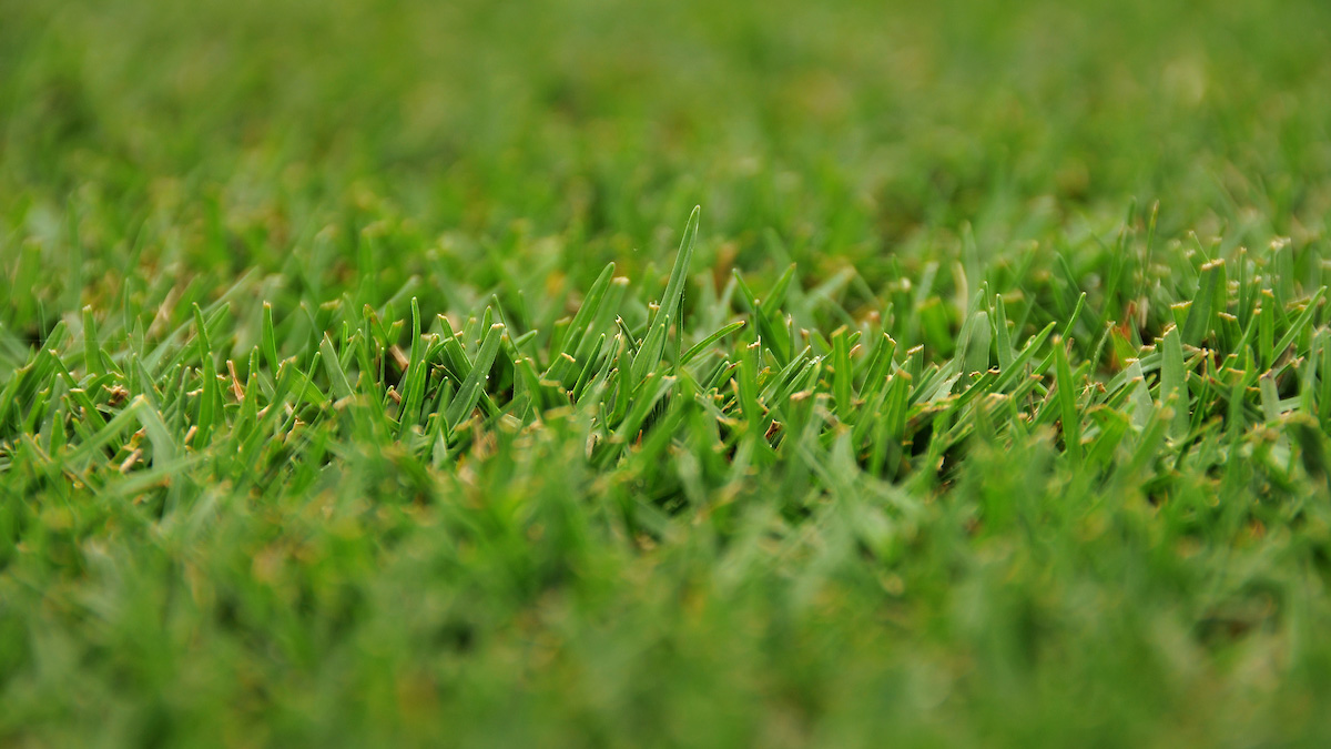 Close-up look of a grass lawn.