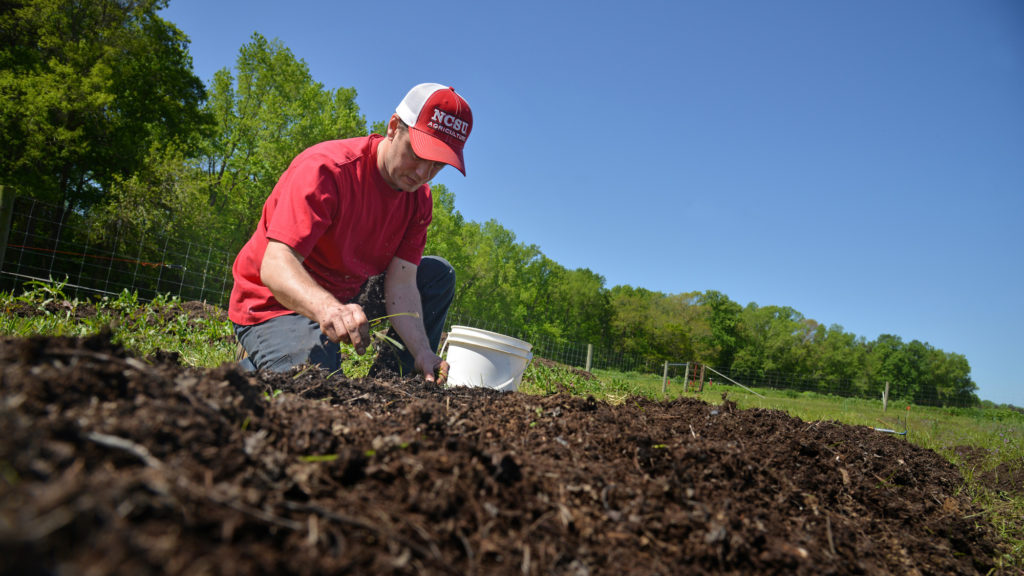 A soil sciences student works the soil in his section of garden at North Carolina State University's Agroecology Farm.