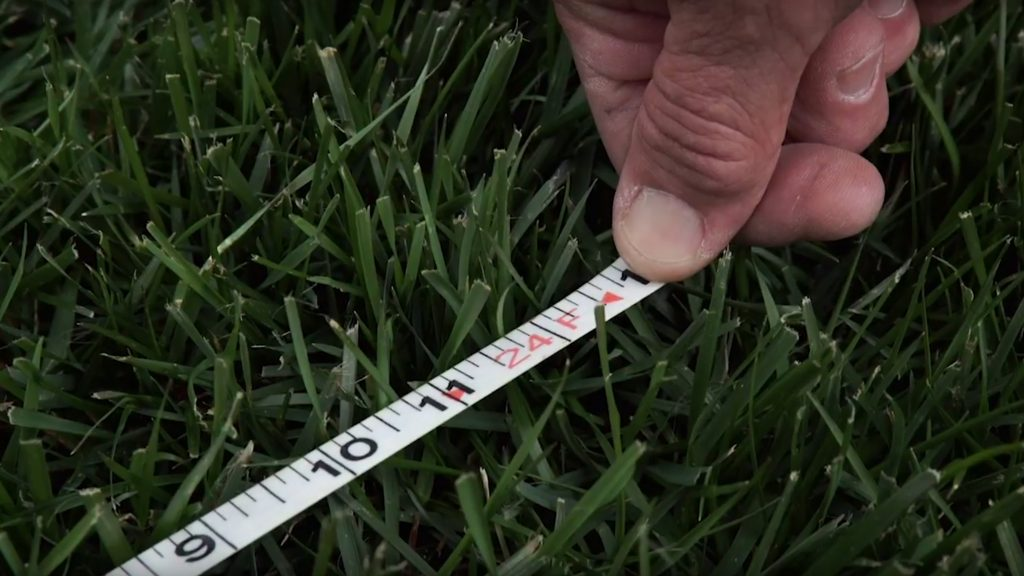 Hand holding a tape measure against grass in the lawn