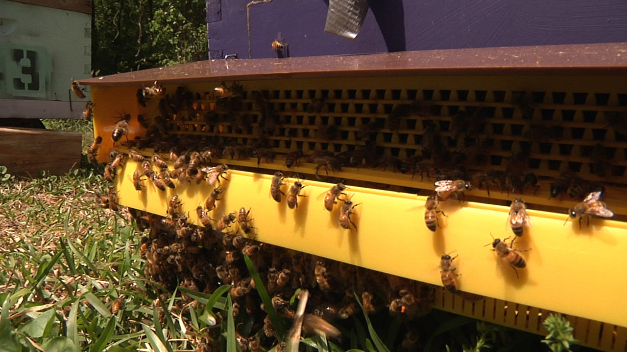 Honey bee hive with close-up of bees