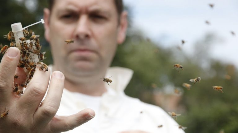 David Tarpy, an NCState Extension apiculture specialist, with honey bees on his hand as part of research.