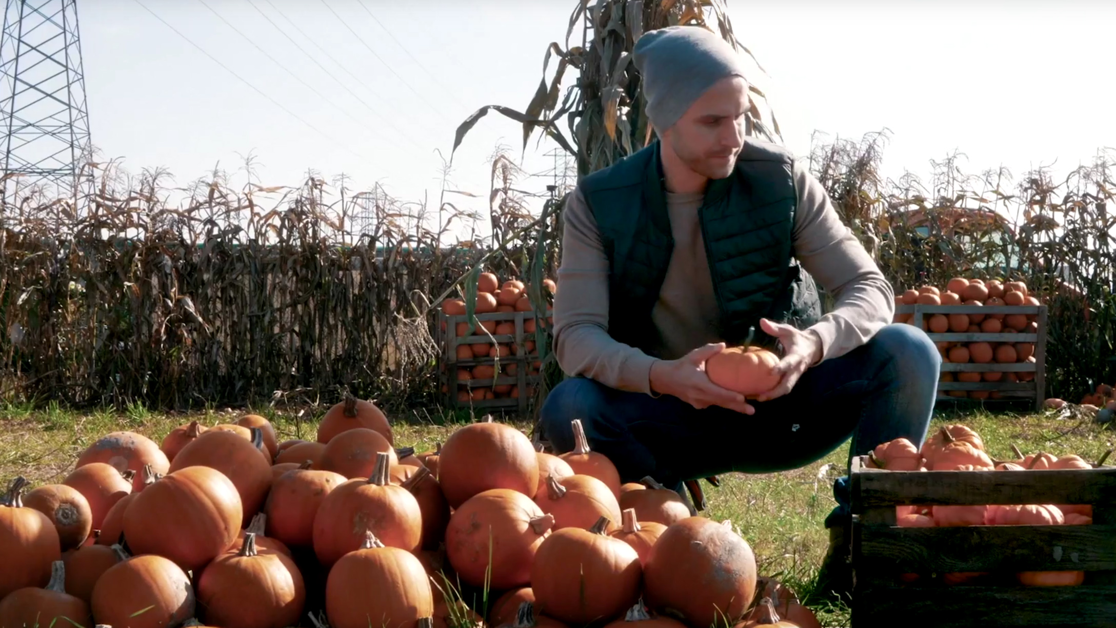 A man placing small pumpkins into a wooden crate while in a field.