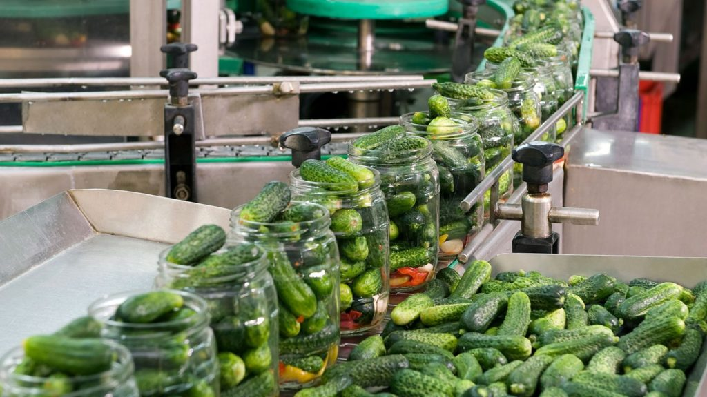 Jars of cucumbers rolling by on a conveyor belt at a pickle operation