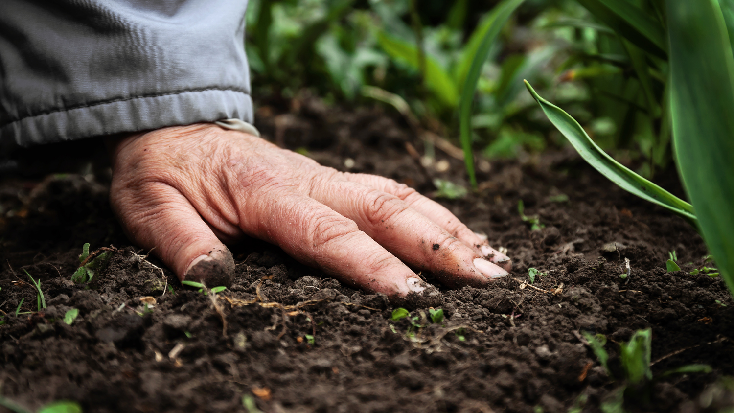 Close up image of a hand on the soil in a garden.