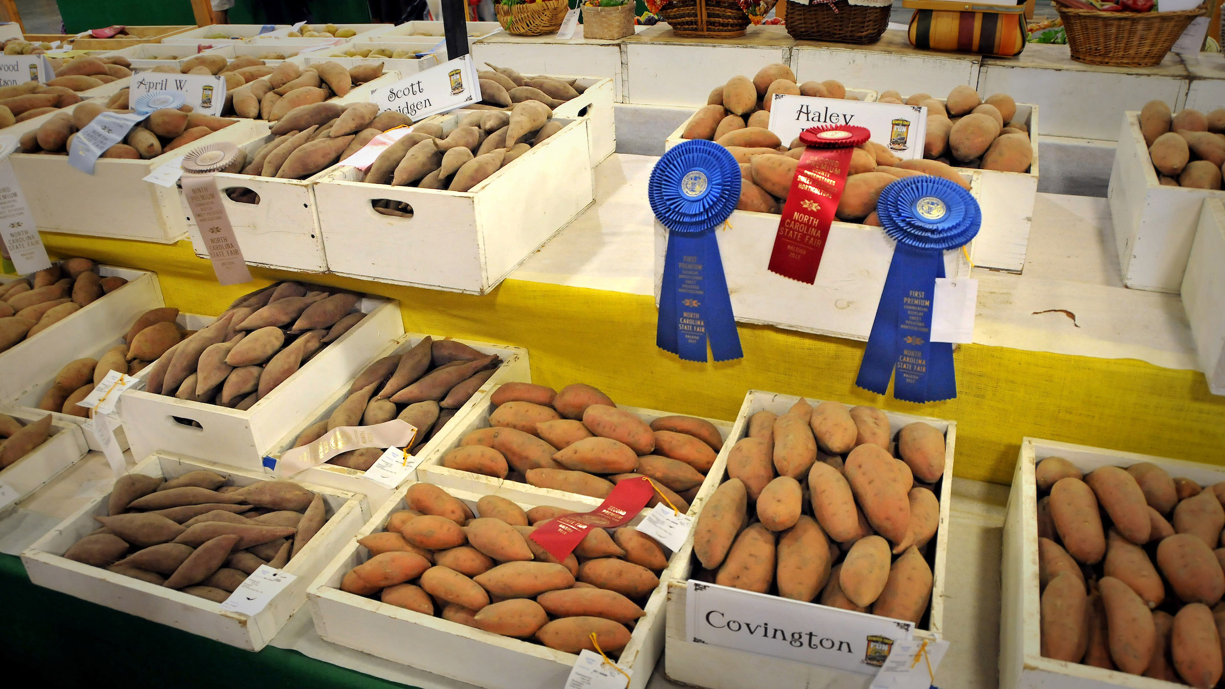 Sweet potato winners with blue ribbons at the N.C. State Fair