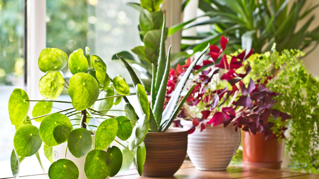 Various green house plants beside a window