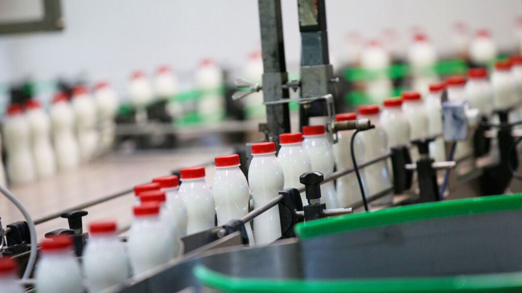 Milk bottles on a conveyor belt in a milk factory