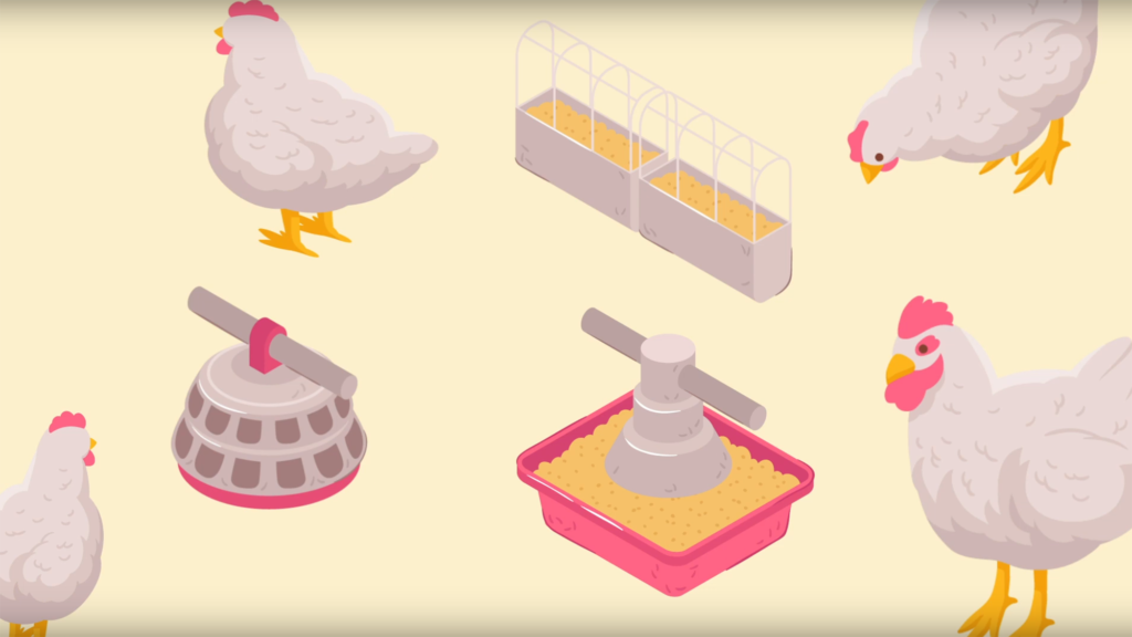 Animated graphic displaying chickens and feed.