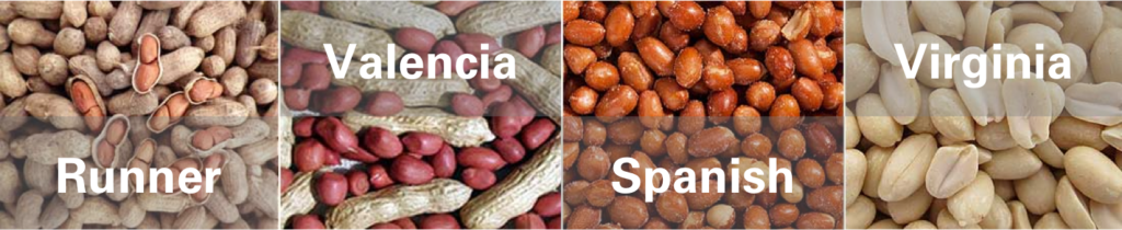 The four types of peanuts produced in the United States are Runner, Valencia, Spanish and Virginia.