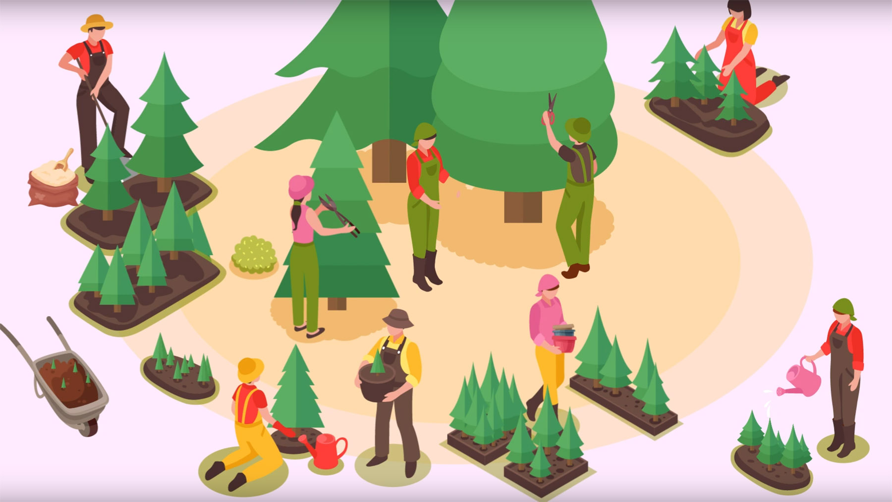 Animated graphic of various people performing tasks associated with Christmas trree production.