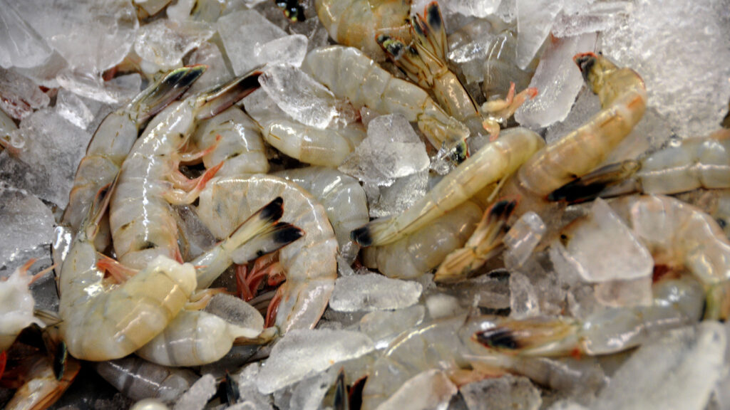 Fresh caught shrimp on ice at Capt'n Pete's Seafood Market in Holden Beach, North Carolina.